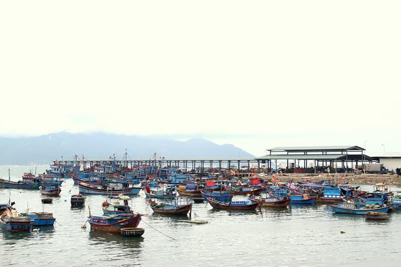 Buổi Sáng Ở Cảng Cá Vĩnh Lương Nha Trang