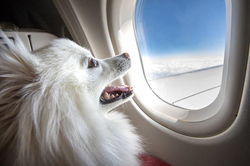 Cách mang thú cưng lên máy bay khi bạn muốn du lịch hoặc đi công tác
