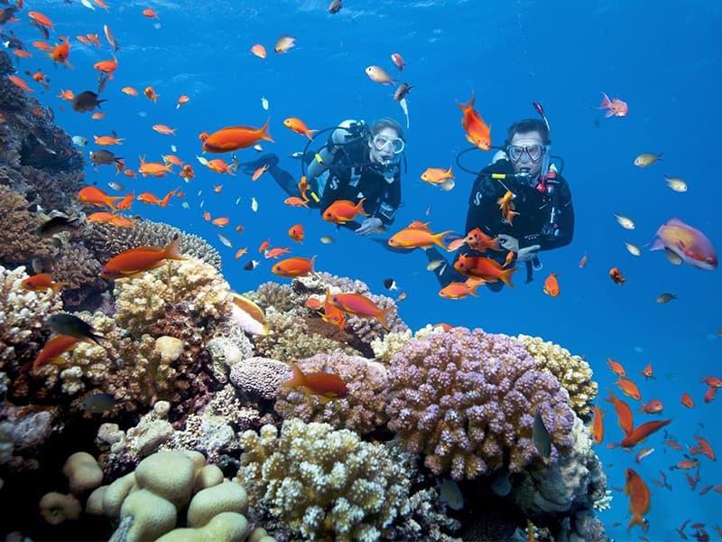 lặn biển ngắm san hô scuba diving