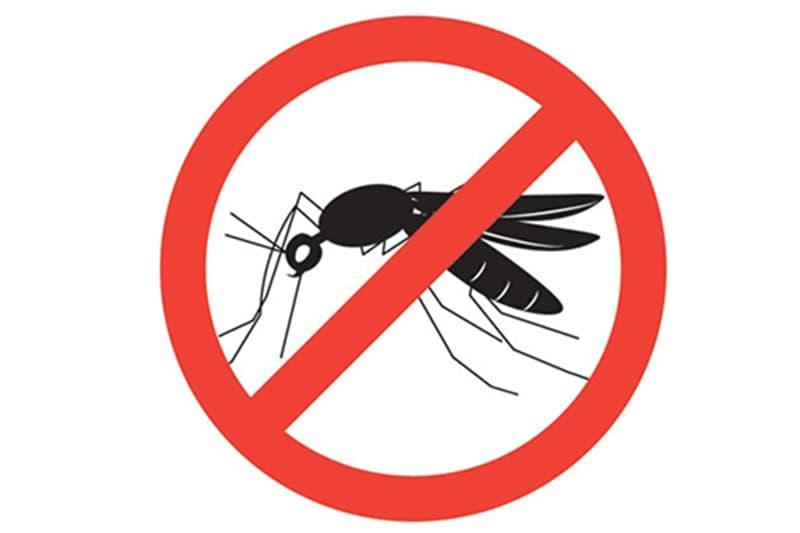 Kinh nghiệm chống muỗi mùa mưa khi đi du lịch