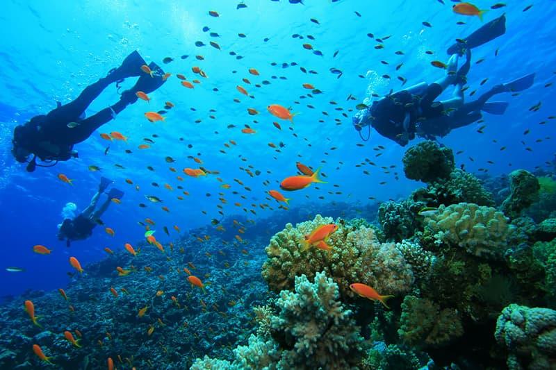 Lặn Scuba Dive Nha Trang