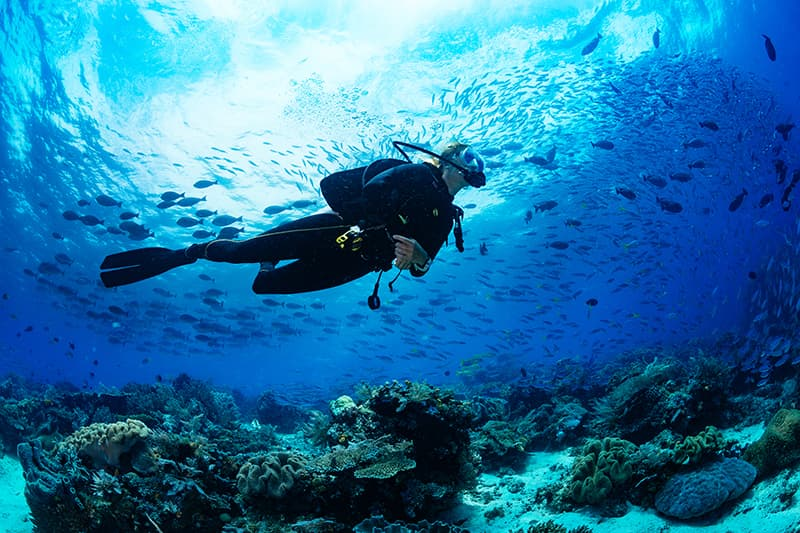 Nên chọn lặn biển Scuba Dive hay Snorkeling?