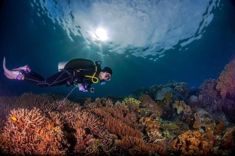 so-sanh-scuba-diving-va-snorkeling-3.jpg (130 KB)