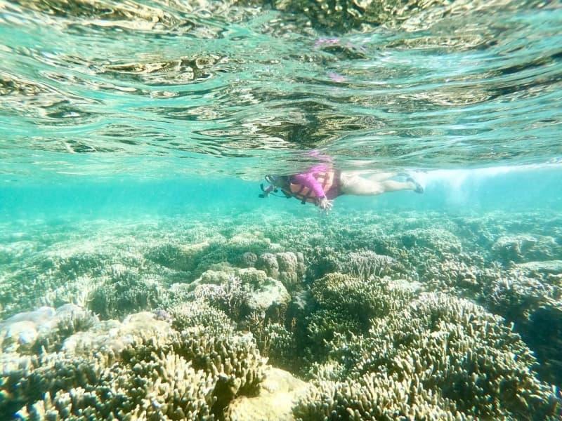 Những hình ảnh san hô tuyệt đẹp dưới đáy biển Nha Trang