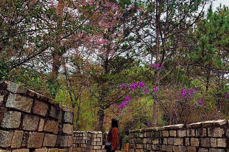 Phát hiện địa điểm sống ảo toanh tại Đà Lạt