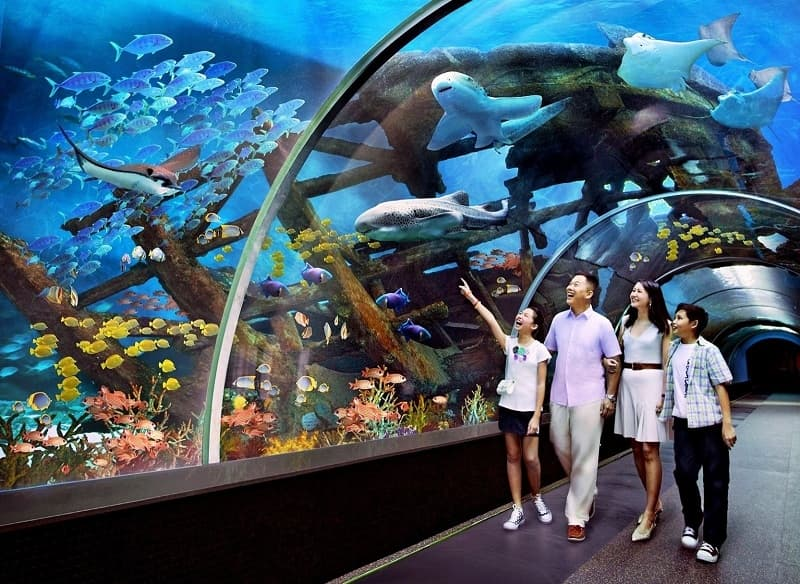 Trải nghiệm biển đầy thú vị tại 3 công viên thuỷ cung tuyệt đẹp Nha Trang