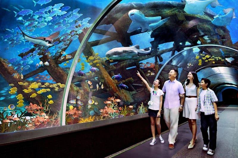Trải nghiệm biển đầy thú vị tại 3 công viên thuỷ cung tuyệt đẹp của Nha Trang