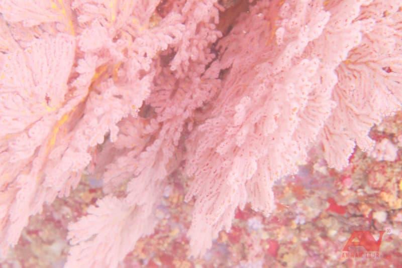 San hô tuyệt đẹp