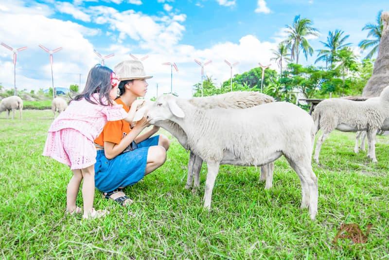 Vui chơi cùng những chú cừu xinh xắn