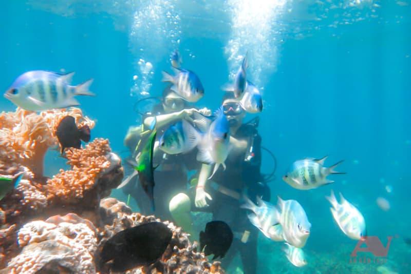 Lặn biển bình dưỡng khí tại Hòn Mun