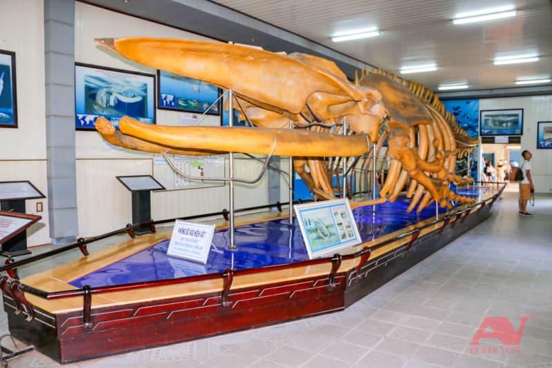 Bộ xương cá voi trưng bày ở Viện Hải dương học