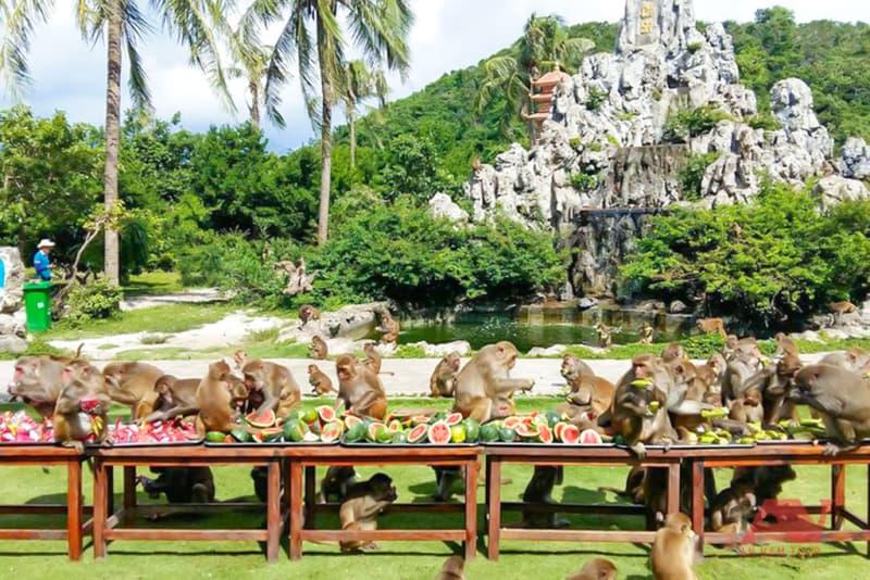 Đảo Khỉ vịnh Nha Phu Suối Hoa Lan
