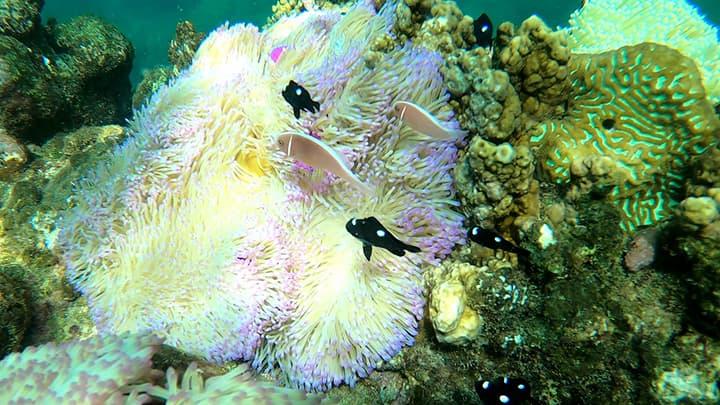 Chiêm ngưỡng san hô Hòn Mun